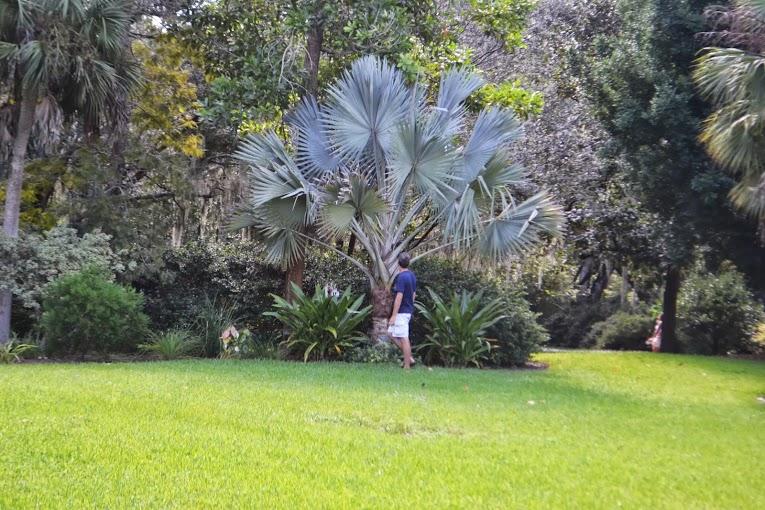Orlando Gardens 3