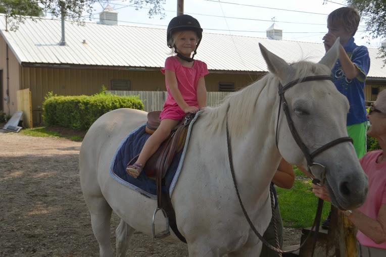 horse-7