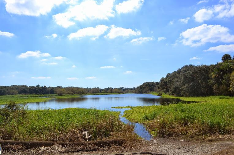 Myakka River State Park 005