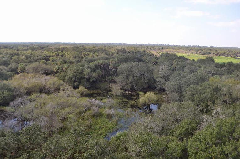 Myakka River State Park 140