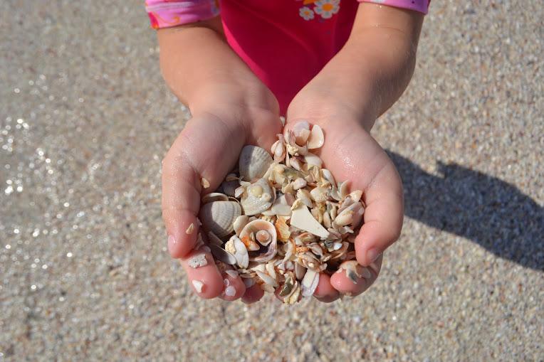 mary-shells